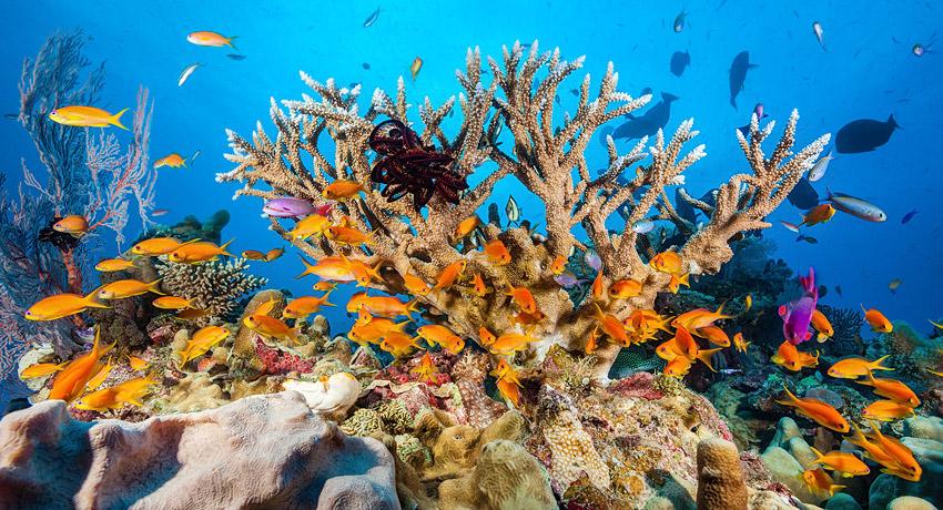 Corales - KH